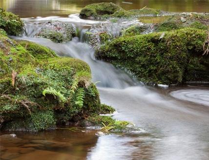 Exposição fotográfica mostra Reservas Florestais dos Açores